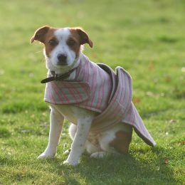 Dog Coat - Rose Stripe